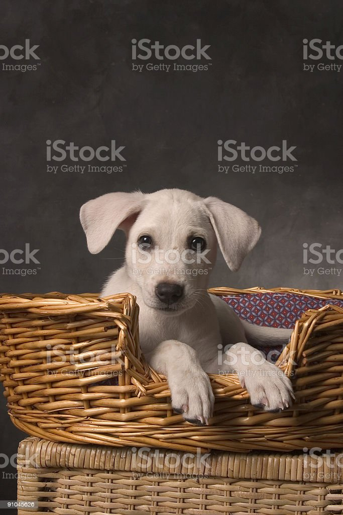 Dog is not a toy royalty-free stock photo