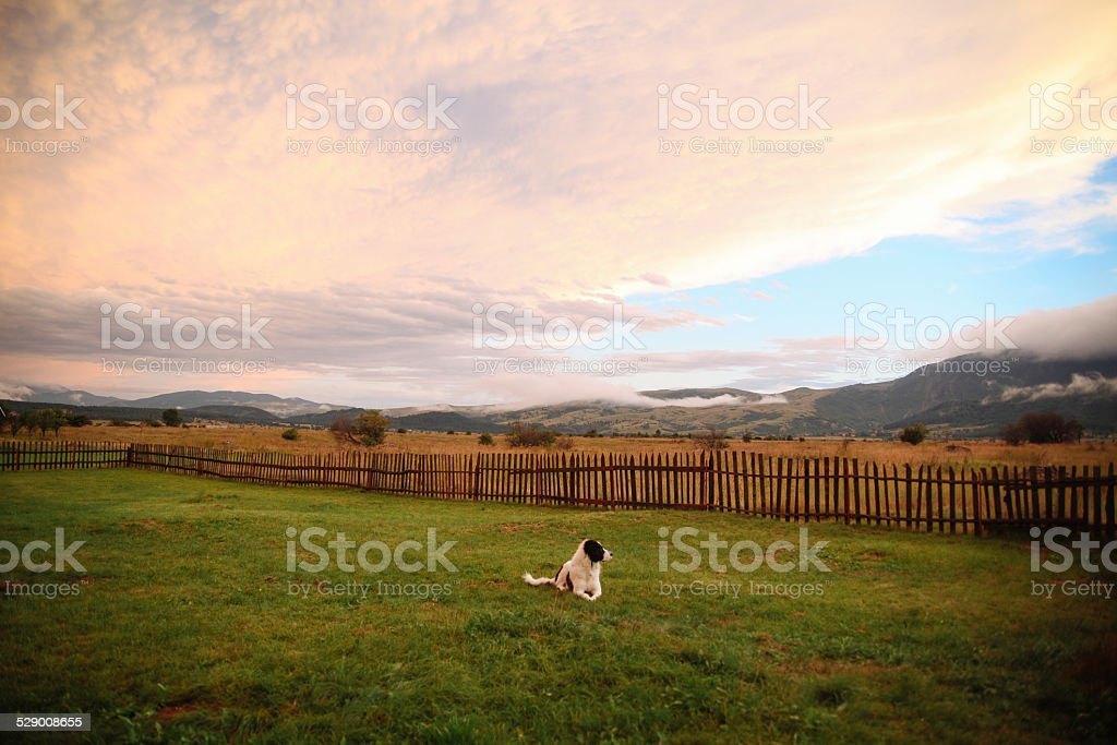 Dog is relaxing in the nature stock photo