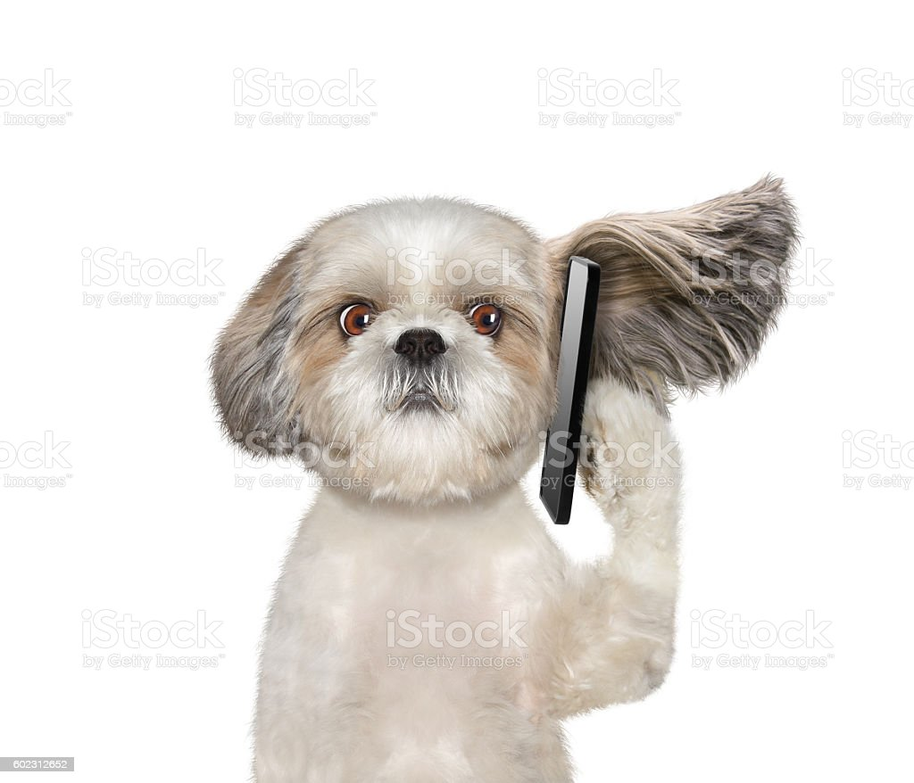 Dog is talking over the mobile phone stock photo