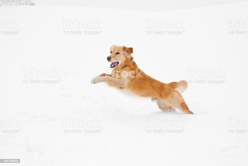 Dog jump in snow stock photo