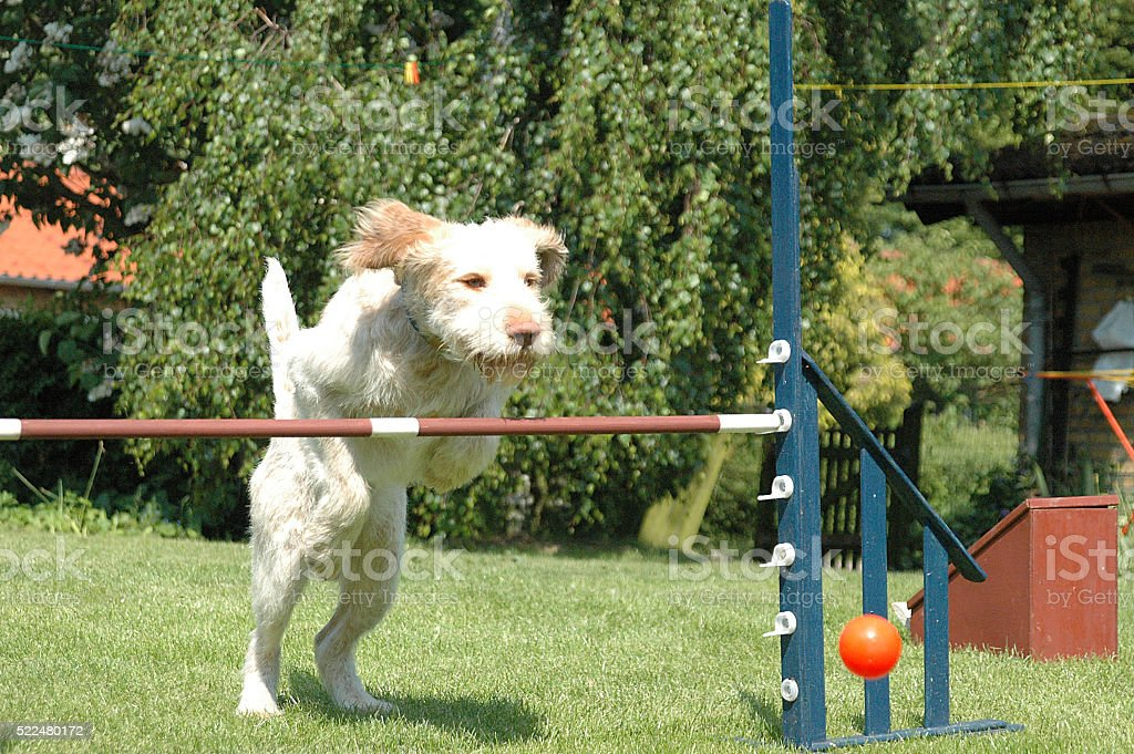 Dog Jump #2 stock photo