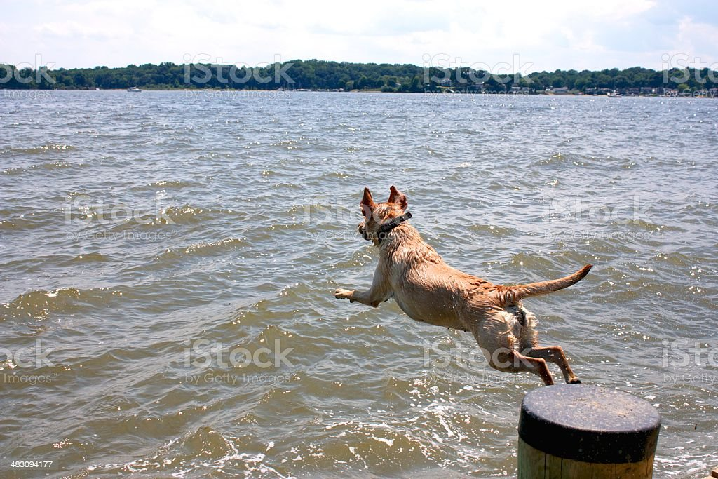 Dog jumping into sea stock photo