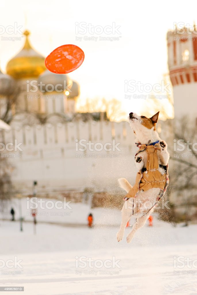 Dog jumping on background of orthdox temple. stock photo