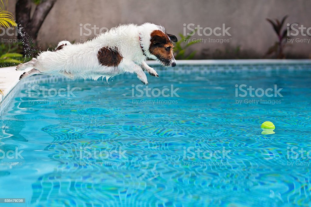 Dog jumping to retrieve a ball in swimming pool stock photo