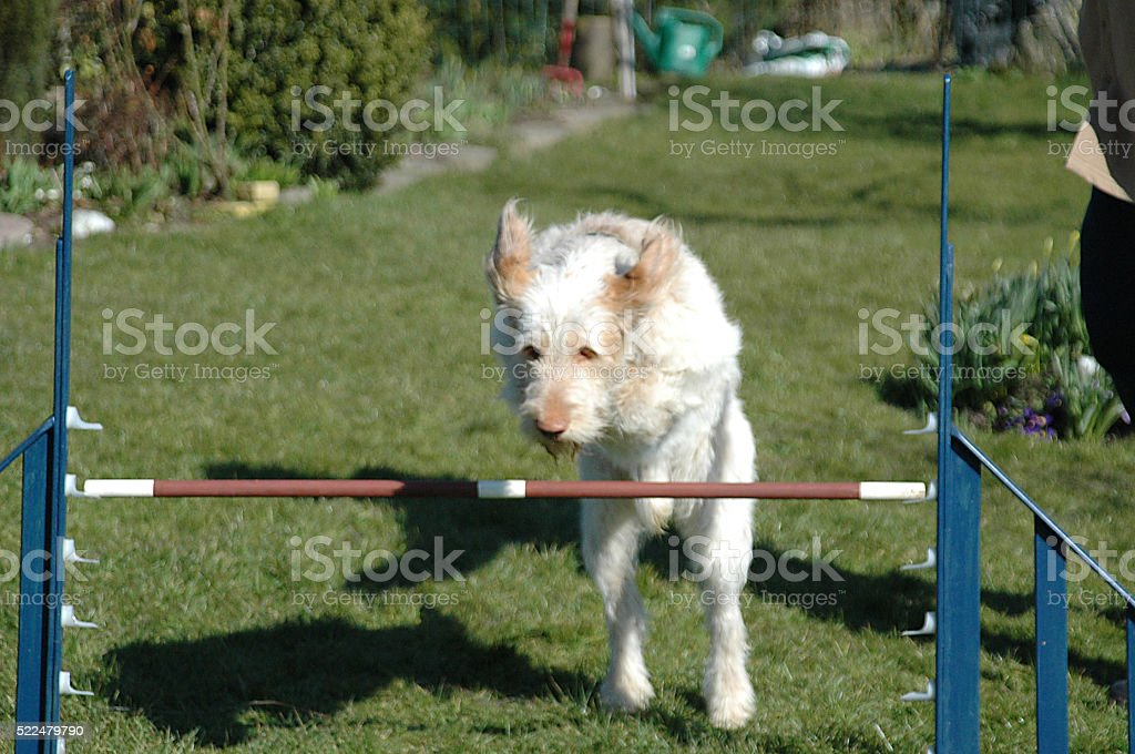 Dog Jumps #1 stock photo