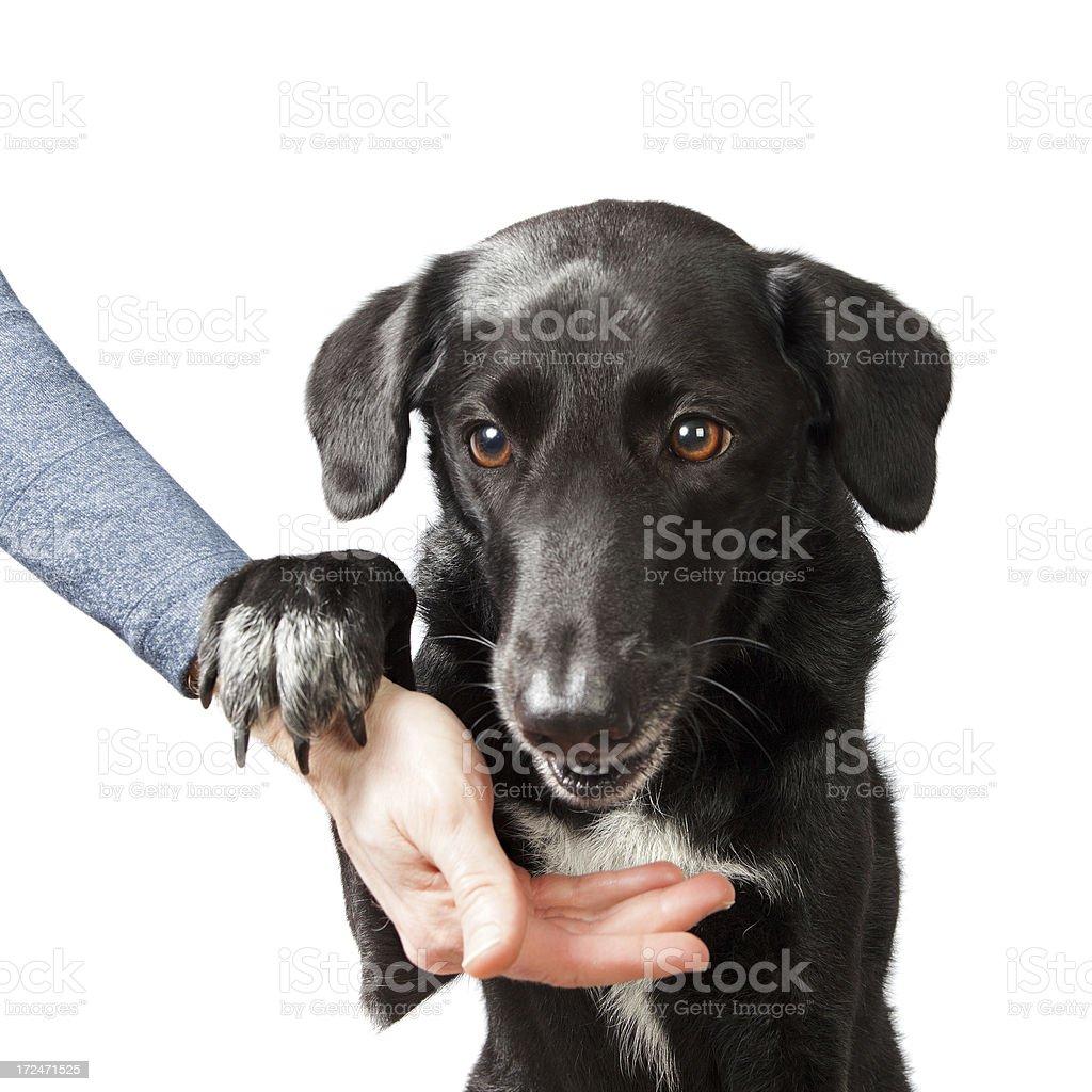 Dog just got a treat stock photo