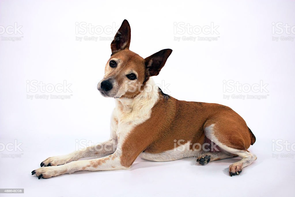 Dog laying down with head cocked stock photo