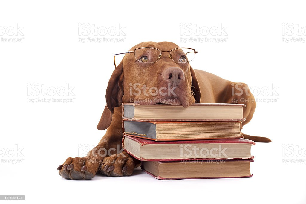 dog laying head on a pile of books royalty-free stock photo