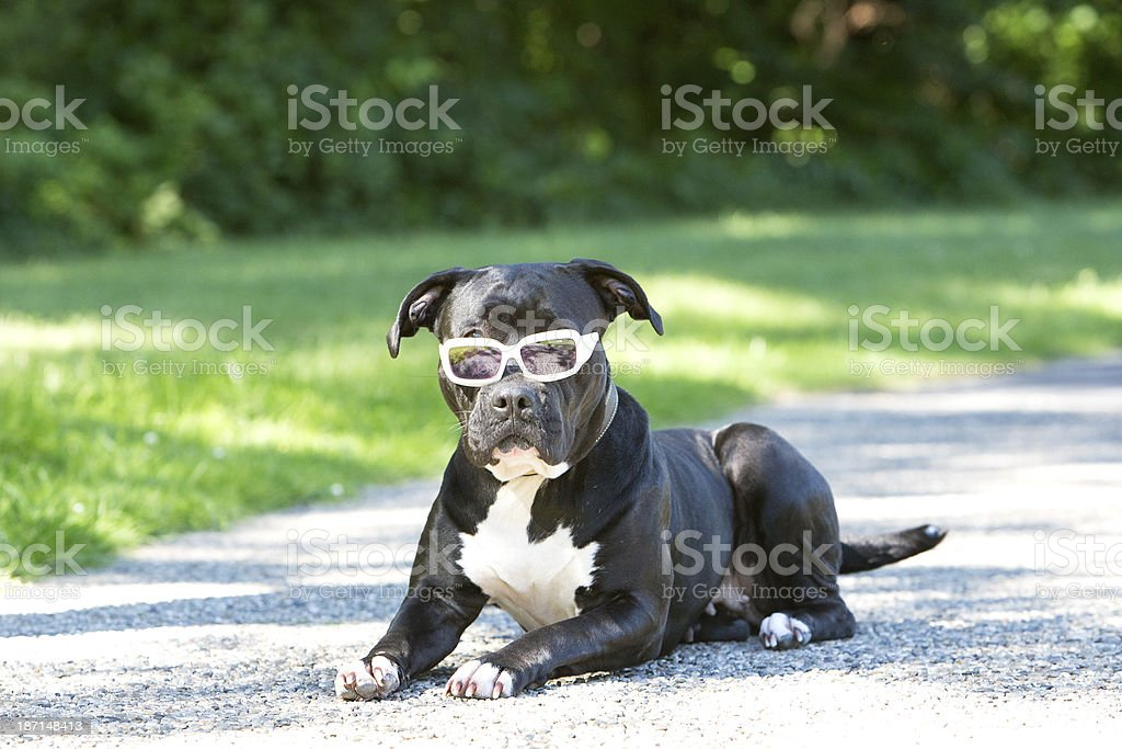 Dog Laying in the park royalty-free stock photo