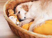Dog laying in wicker bed with stuffed toys