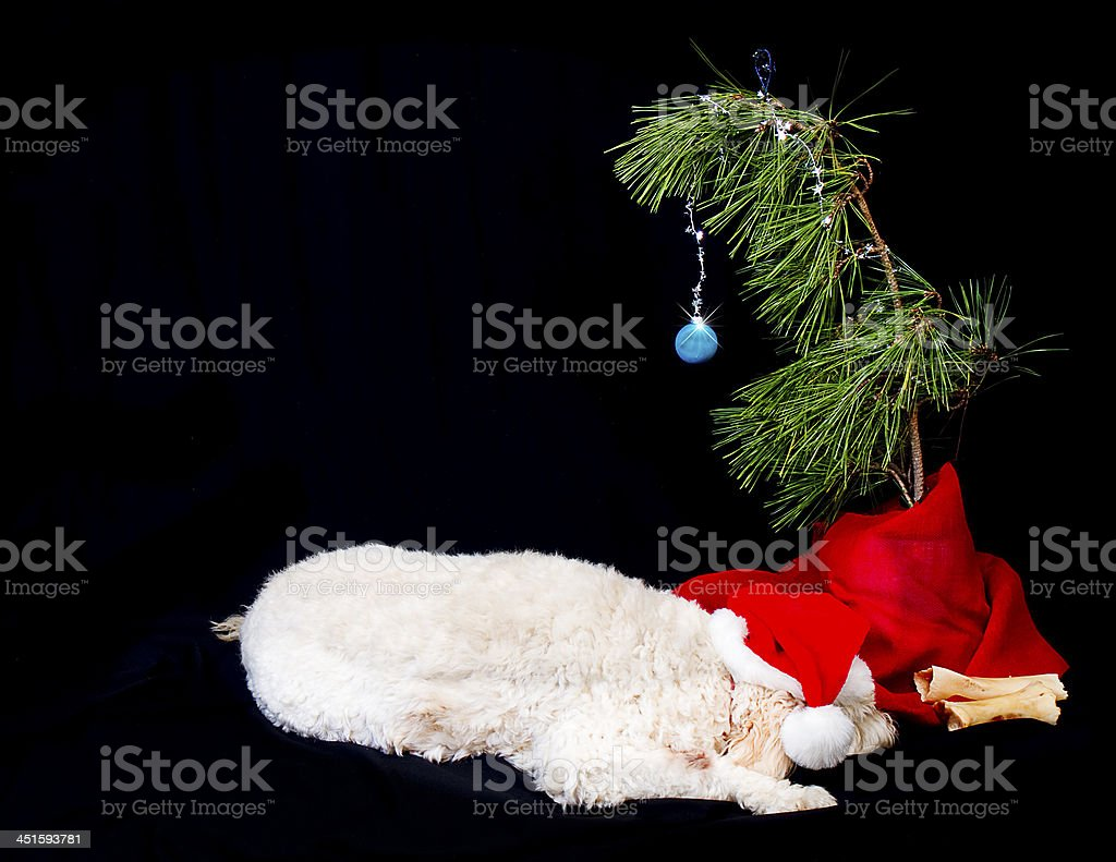 Dog Laying next to Twig Christmas tree stock photo