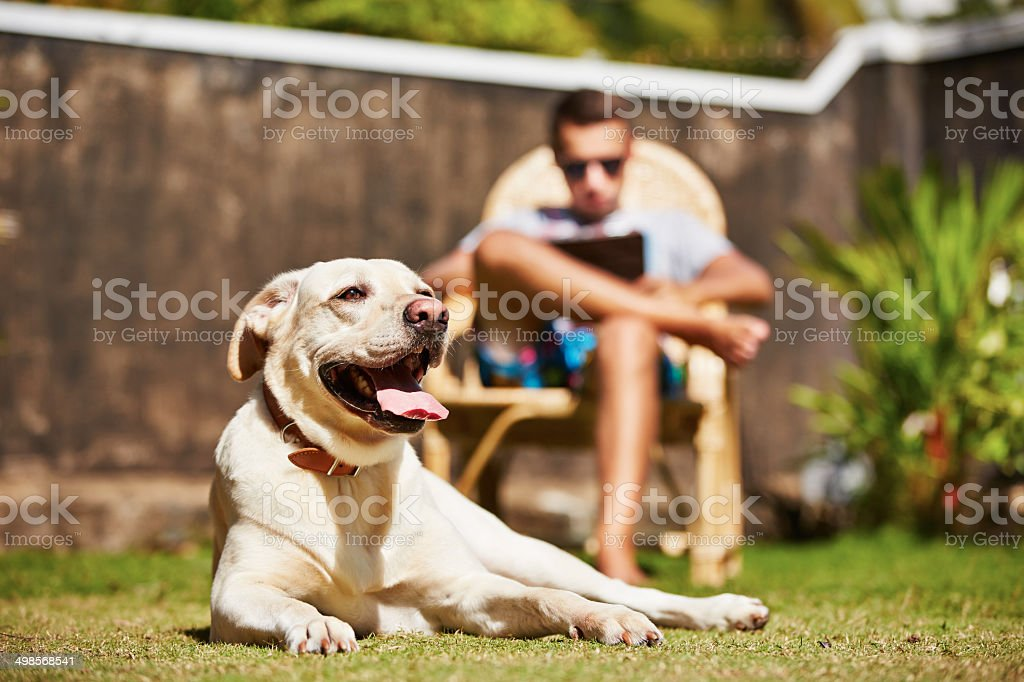 Dog laying on grass, man with laptop in background stock photo