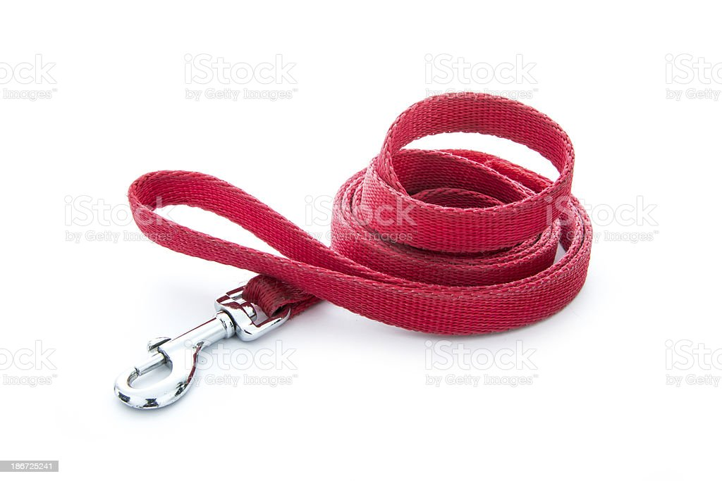 dog leash stock photo