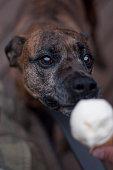 Dog Licking Ice Cream Cone