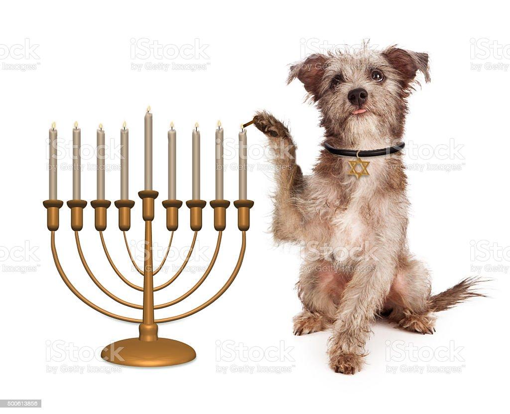 Dog Lighting Hanukkah Menorah stock photo
