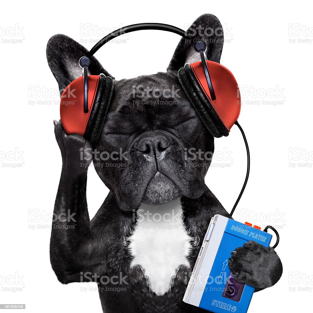dog listening music stock photo