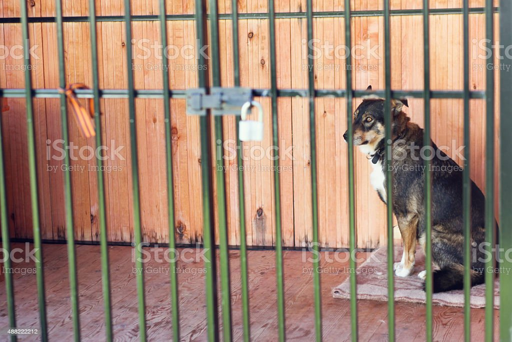 Dog locked in the cage stock photo