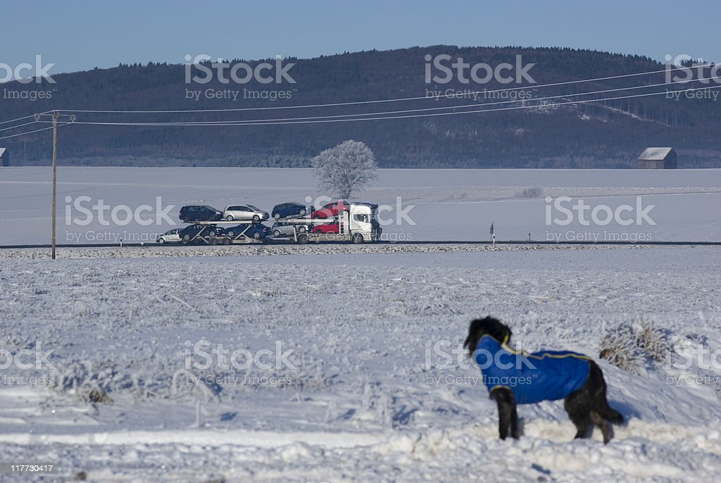 Dog looking at a driving truck on the federal road royalty-free stock photo
