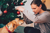 Dog looking at owner under the christmas tree
