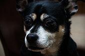 Dog looking at something