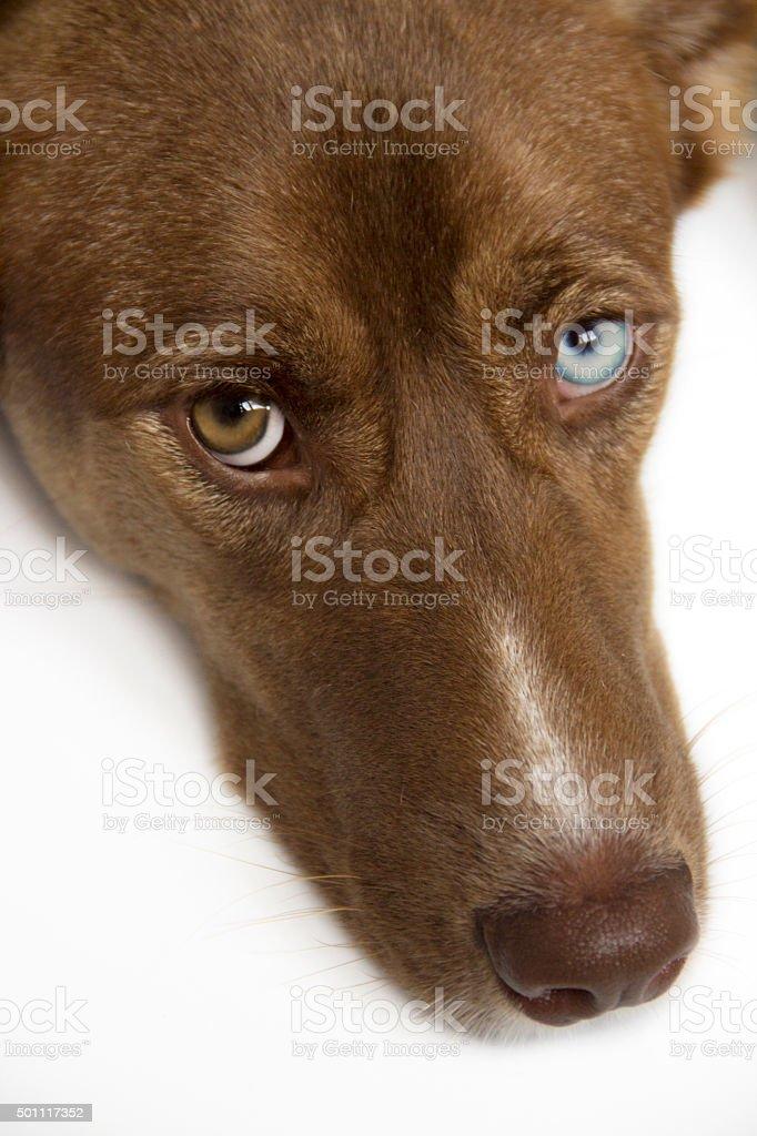 Dog looking at the camera stock photo