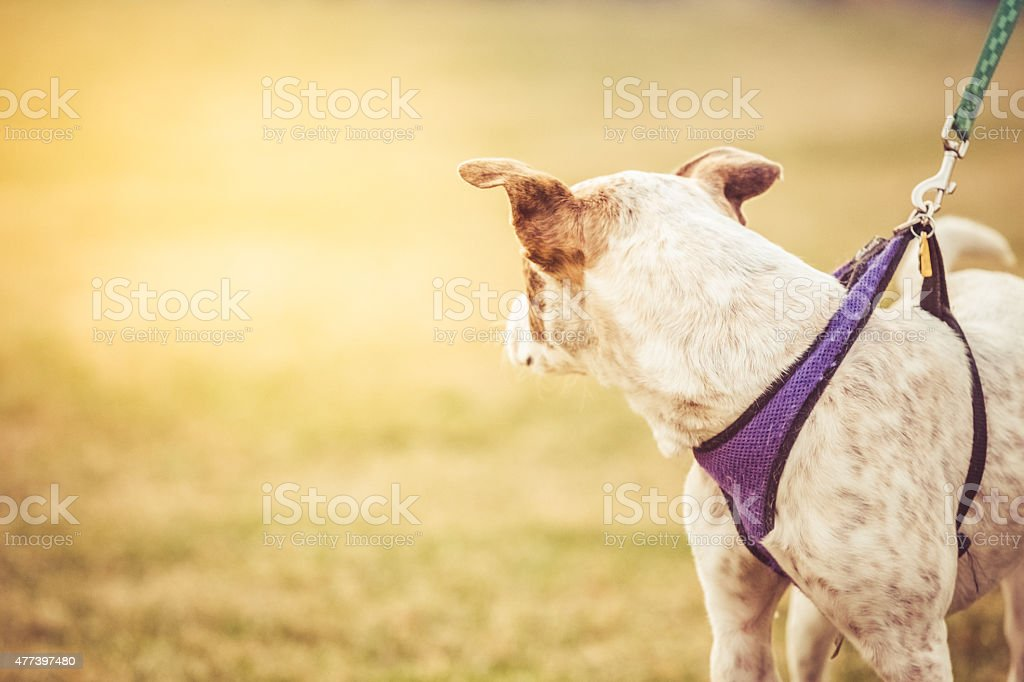 Dog looking away stock photo
