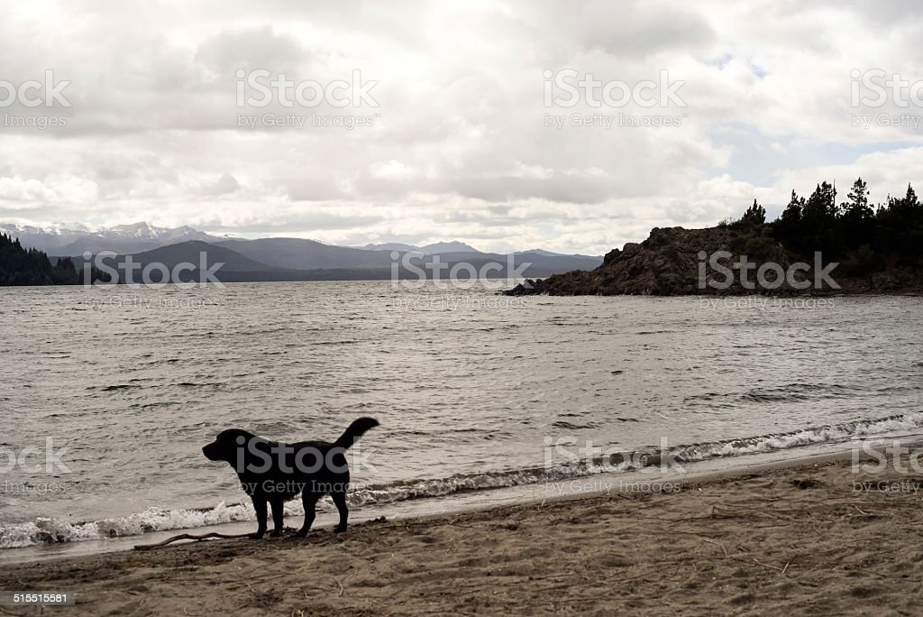 Dog looking out over alpine lake stock photo
