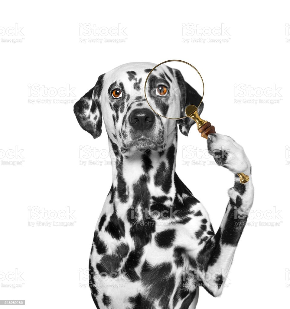 Dog looking through a magnifying glass loup stock photo
