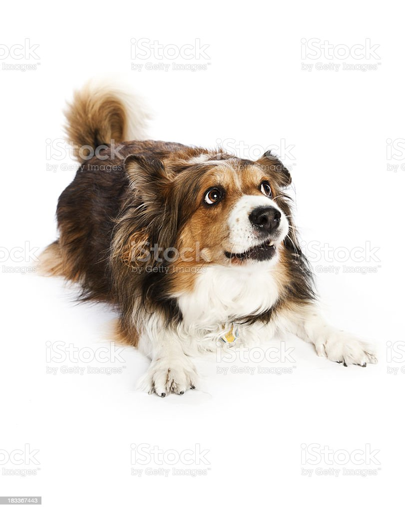 Dog looking up stock photo