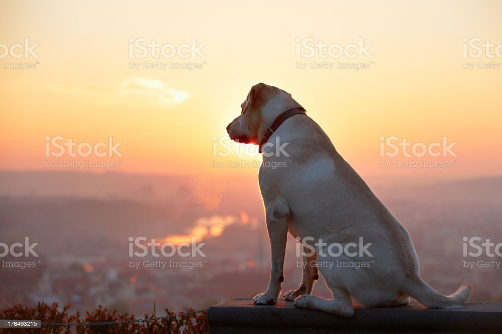 A dog looks out onto the horizon as the sun rises stock photo