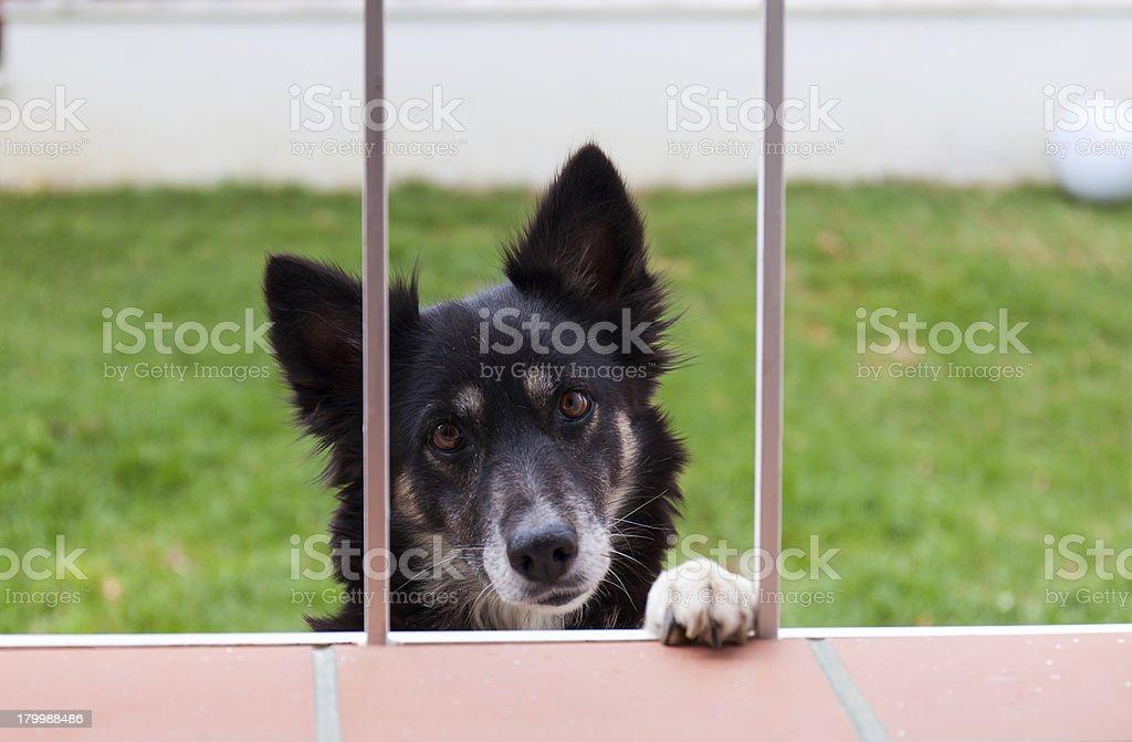 Dog looks through a window stock photo