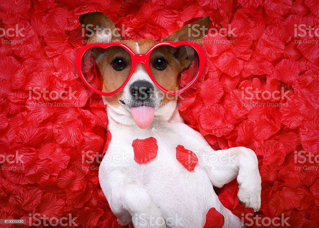 dog love rose valentines stock photo