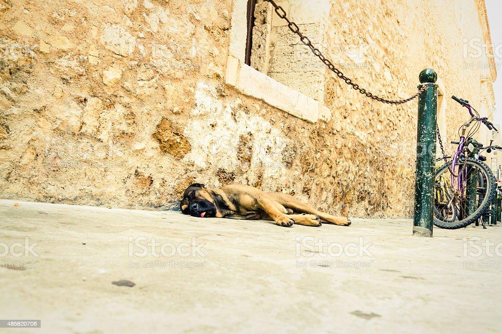 Dog lying on the street stock photo