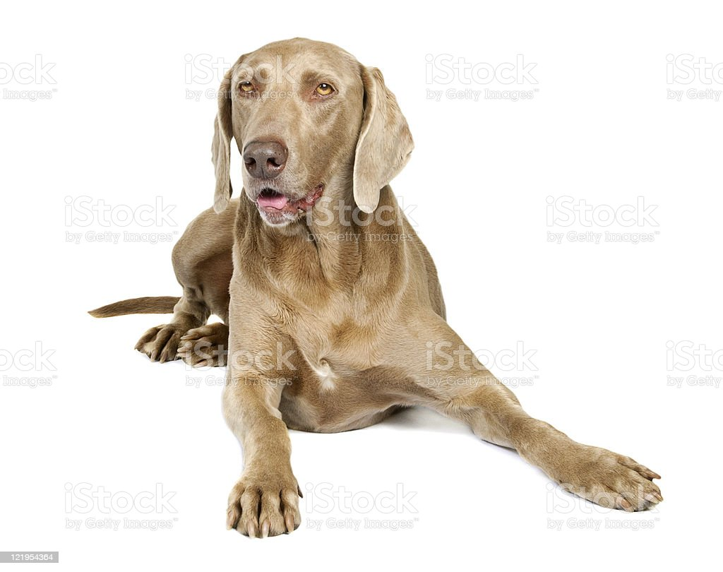 Dog lying stock photo