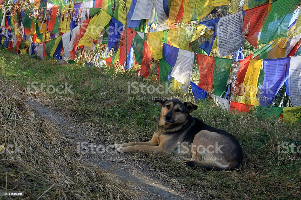 Dog lying under prayer flags stock photo