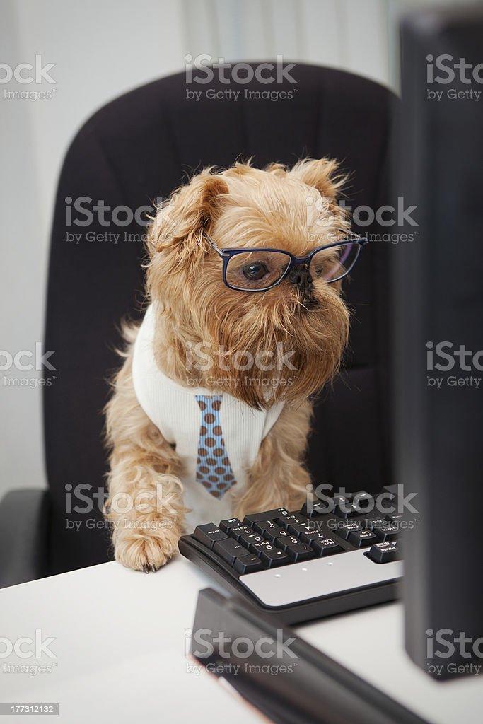 Dog Manager royalty-free stock photo