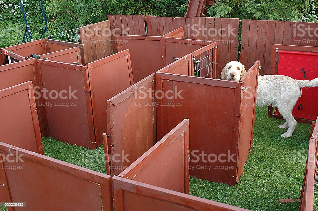 Dog Maze #2 stock photo
