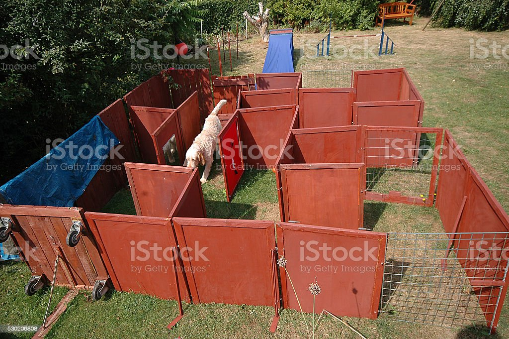 Dog Maze #1 stock photo