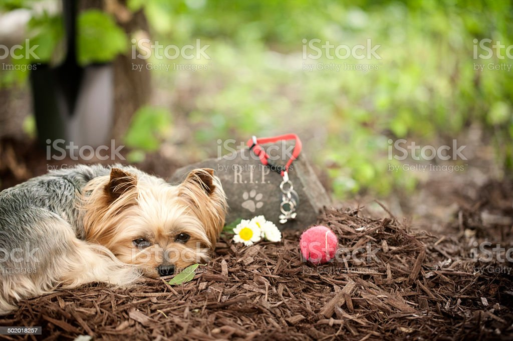 Dog Memorial stock photo