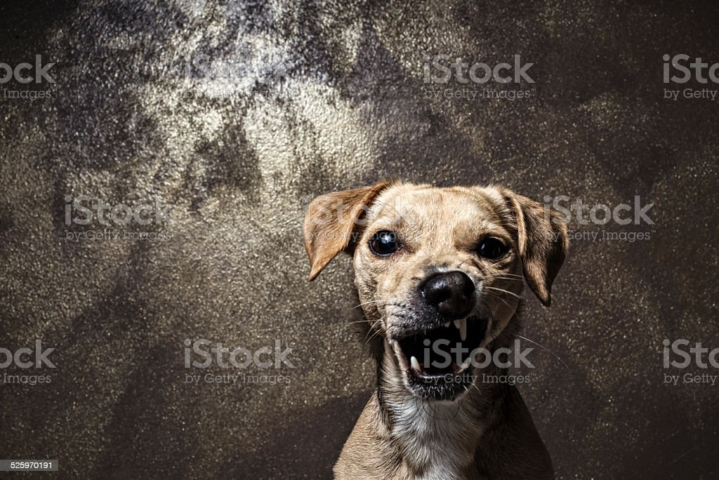 Dog mix breed portrait making smile in front of camera stock photo