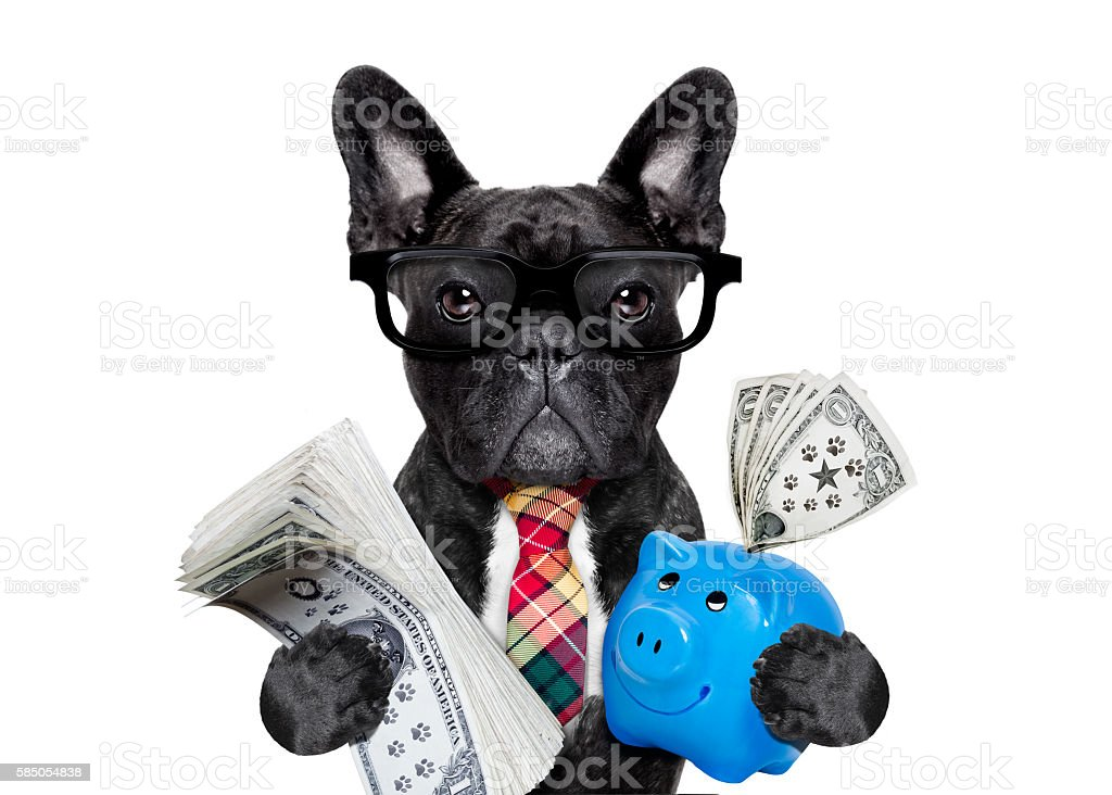 dog money and piggy bank stock photo
