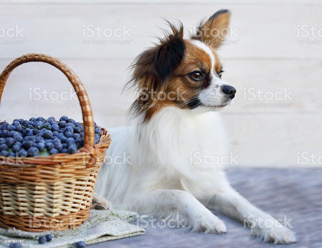 dog near a basket stock photo