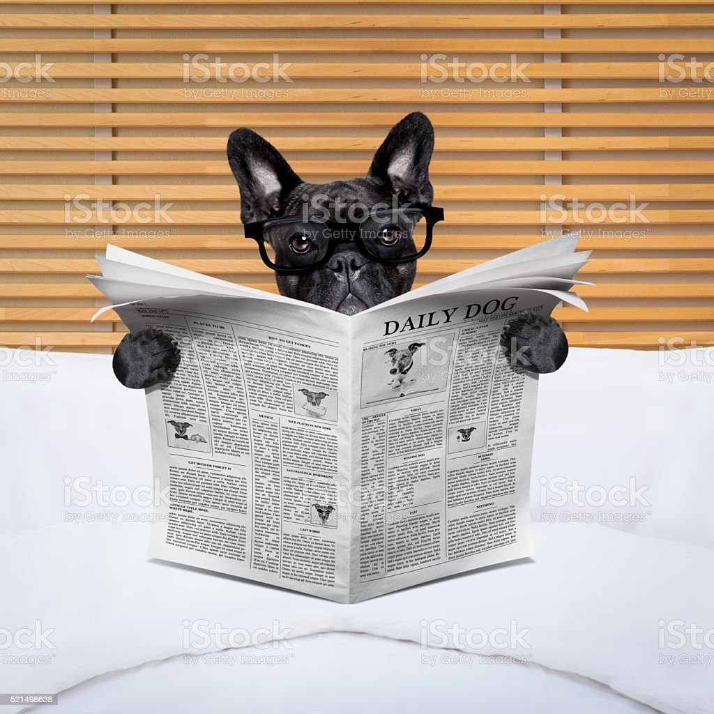 dog newspaper in bed stock photo