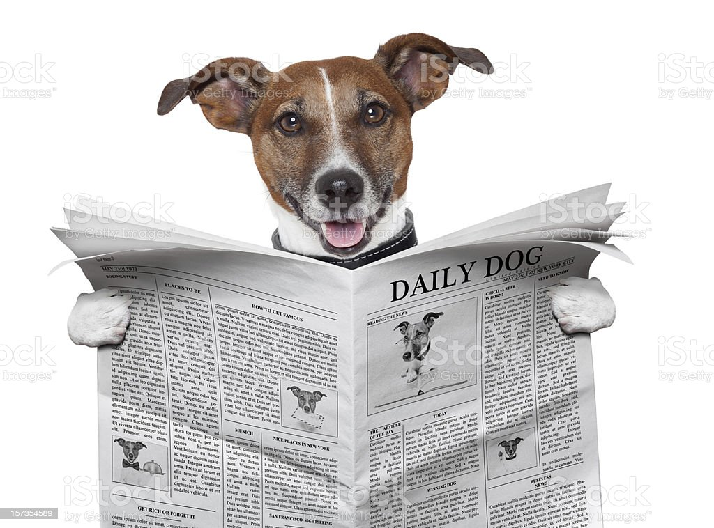 dog newspaper stock photo