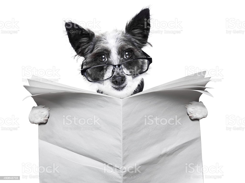 dog newspaper royalty-free stock photo