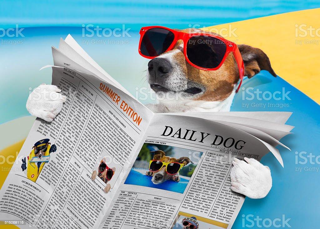 dog newspaper reading stock photo