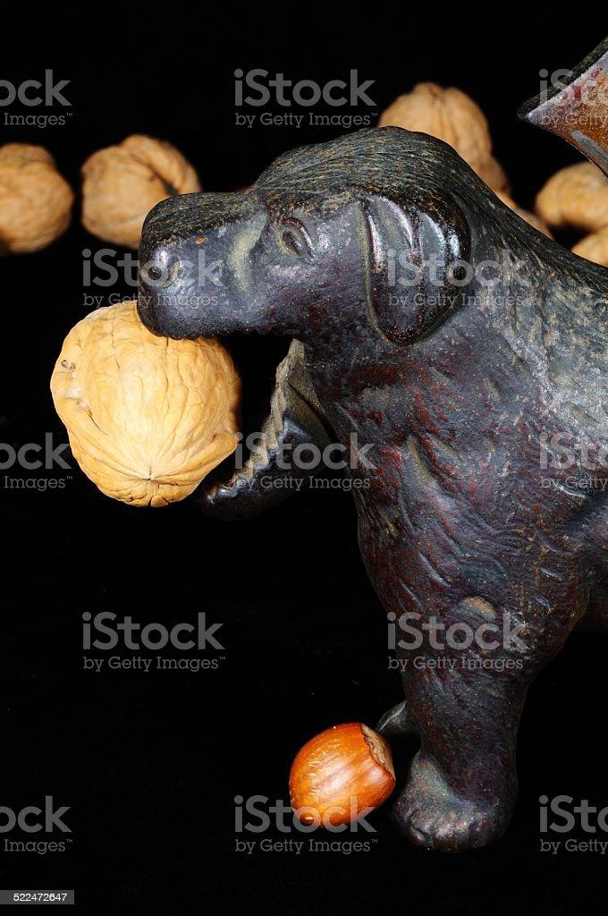 Dog nutcracker with walnut. stock photo