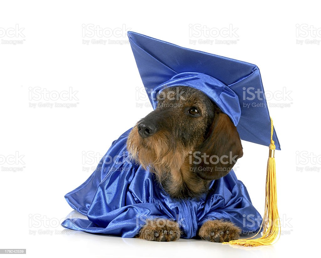 dog obedience training royalty-free stock photo