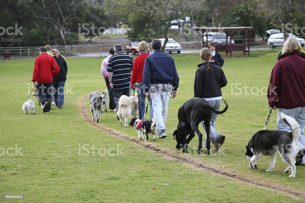 Dog obedience training stock photo