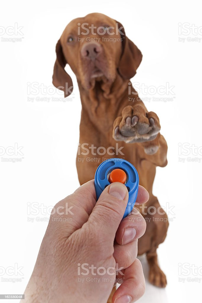 dog obedience training with clicker stock photo